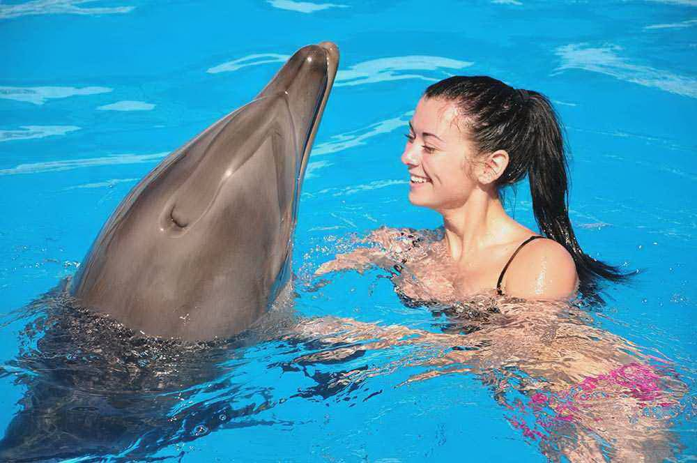 Click to enlarge image 1_Swimming_with_dolphins_Sharm_main_photo.jpg